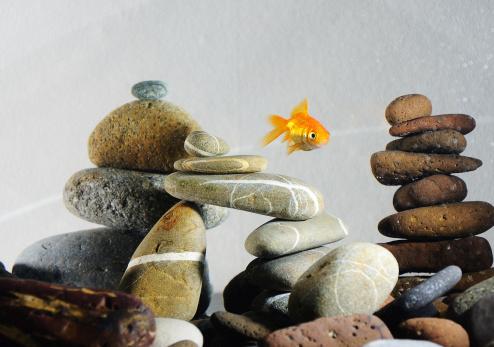 Aquarium et poissons : faire le bon choix