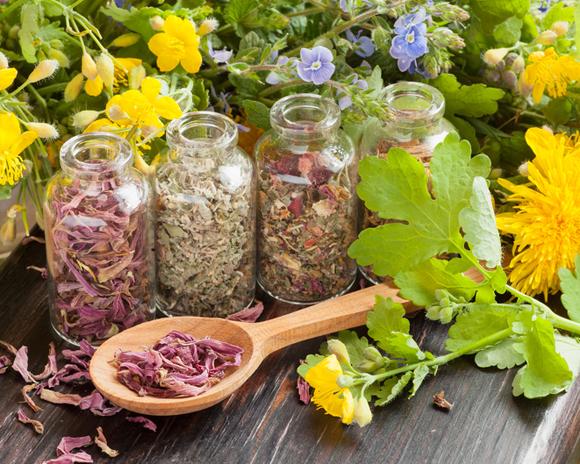 Confier sa santé aux végétaux