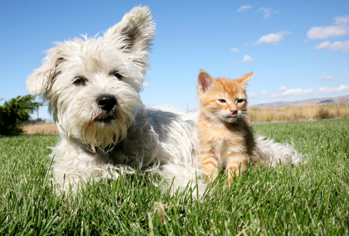 Je soigne mon animal avec la phytothérapie