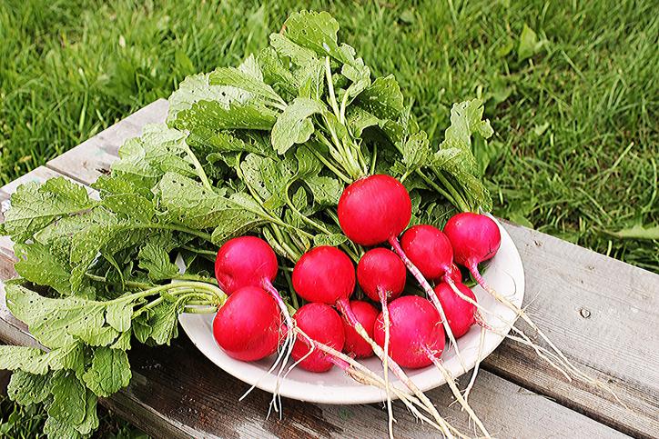 Le radis bon pour la santé