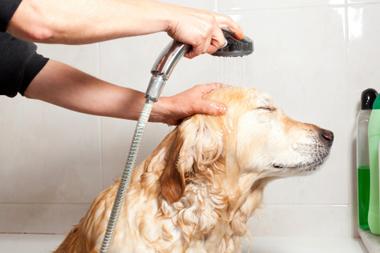 Les shampooings doux naturels pour chien fragile