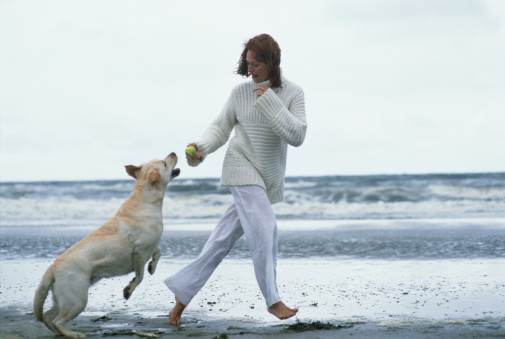 Venir à bout des douleurs articulaires de son chien