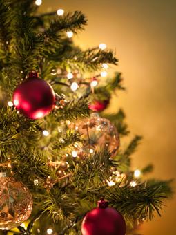 Un geste écologique ? Le sapin de Noël naturel !