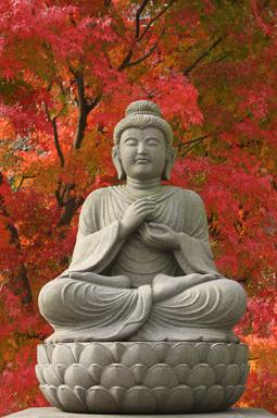 L'énergie de Bouddha toujours plus disponible...